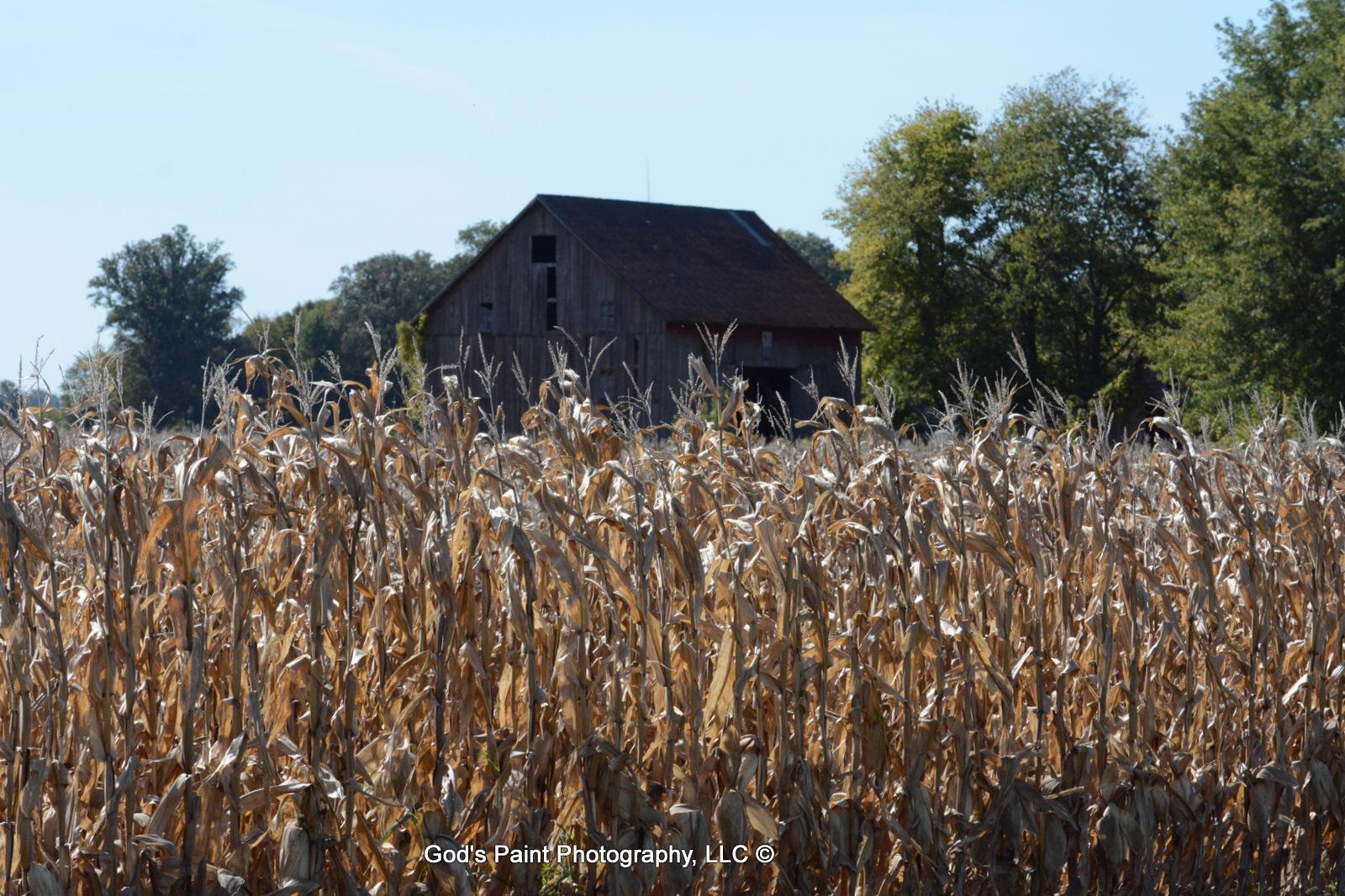 Corn & Barn