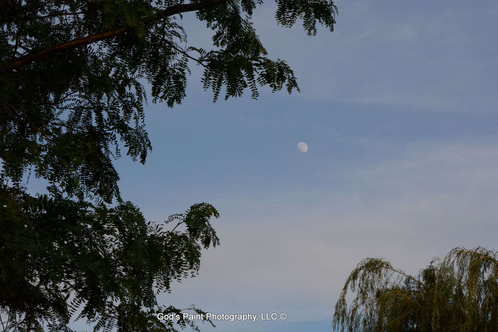 Almost A Full Moon Framed In Trees